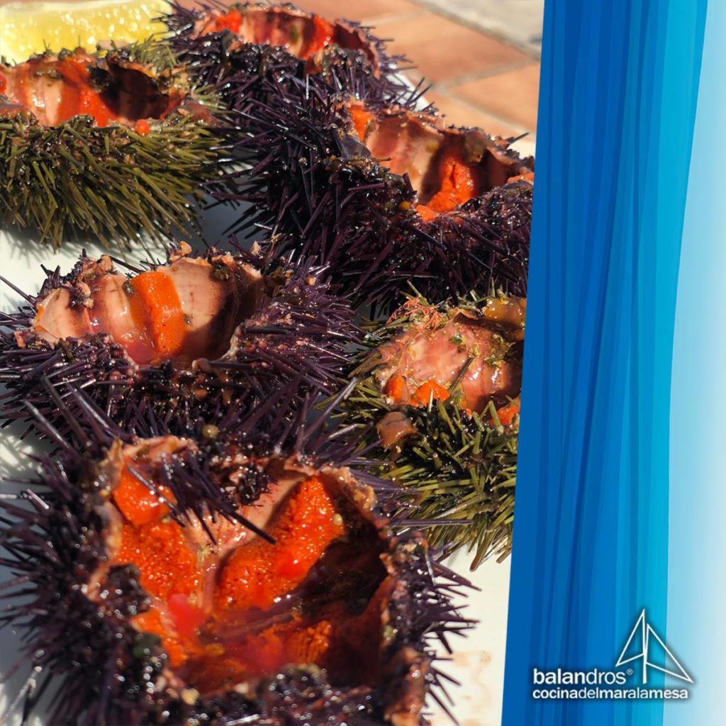 comer erizos de mar en Dénia 1
