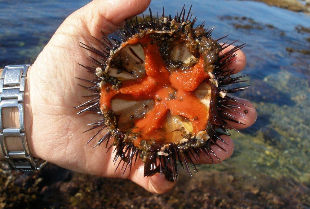 Comer erizos de mar en Dénia con las mejores vistas