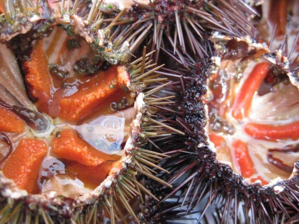 comer erizos de mar en Dénia 4